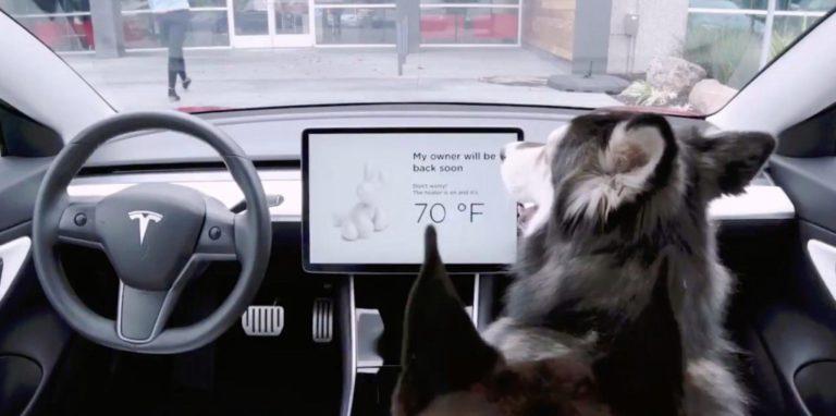 Tesla añade el modo perro y el modo centinela