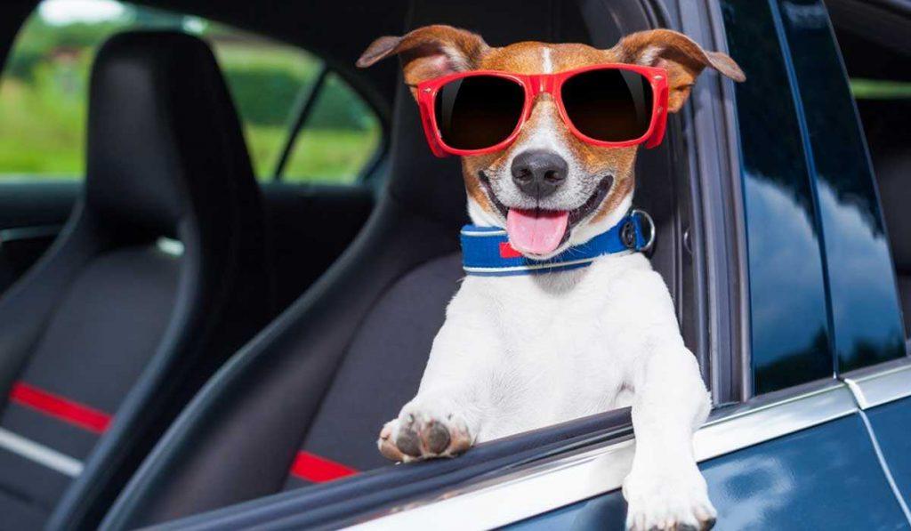 viaje seguro y amigable con tus mascotas