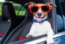 Photo of Consejos para un viaje seguro y amigable con tus mascotas