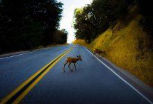 Photo of Cómo evitar atropellar animales con su coche