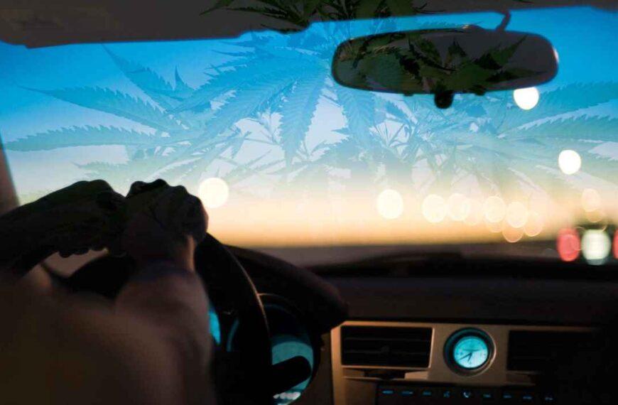La mitad de los consumidores de cannabis piensan que pueden conducir de forma segura mientras están drogados ¿es eso cierto?