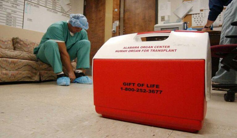 Hechos y mitos sobre la donación de órganos en Alabama como conductor